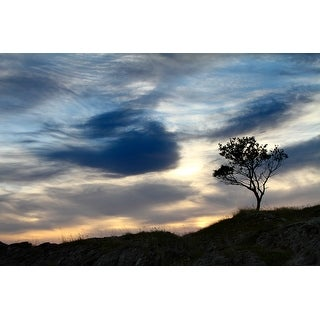 Tree Landscape Photograph Wall Art Canvas