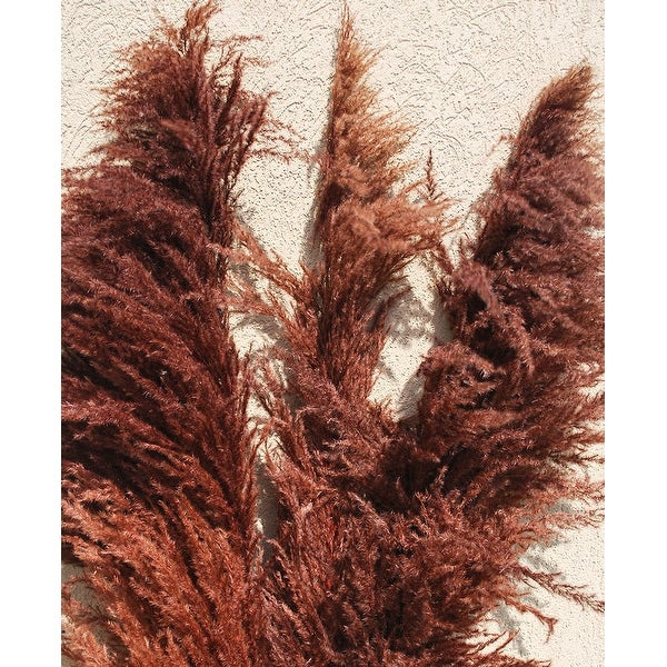 Shop Dried Pampas Grass Brown Color Large 3 Plume