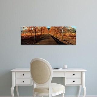 Easy Art Prints Panoramic Image 'Vineyards along a road, Beaulieu Vineyard, Napa Valley, California, USA' Canvas Art