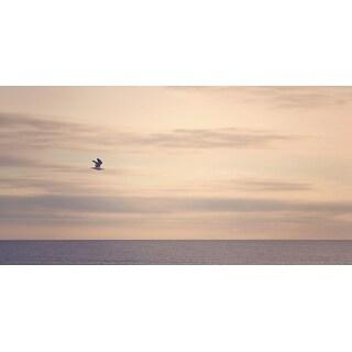 Bird And Sky Photograph Art Print
