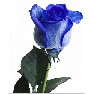 """""""Close-up of blue rose"""" Poster Print"""