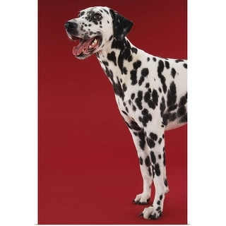 """""""Dalmatian"""" Poster Print"""