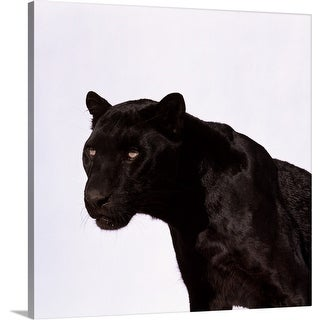 """Black panther (Panthera pardus)"" Canvas Wall Art"