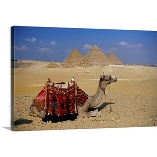 """Camel lying down, Giza, Egypt"" Canvas Wall Art"