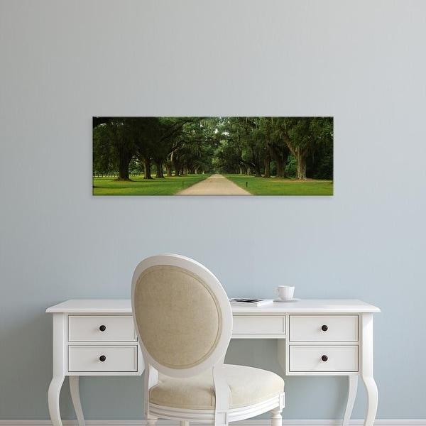 Easy Art Prints Panoramic Images's 'Oak trees on both sides of a path, Charleston, South Carolina, USA' Canvas Art