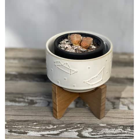 "Mid-Century 4"" Constellation Ceramic Pot on Wood Stand,Ivory"