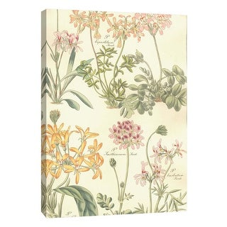"PTM Images 9-108901  PTM Canvas Collection 10"" x 8"" - ""Geraniaceae Plate 306"" Giclee Flowers Art Print on Canvas"