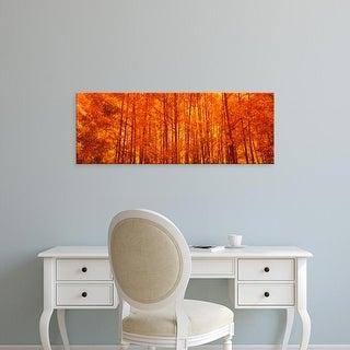 Easy Art Prints Panoramic Images's 'Aspen trees at sunrise in autumn, Colorado, USA' Premium Canvas Art