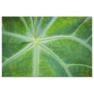 """""""Close-up of plant"""" Poster Print"""