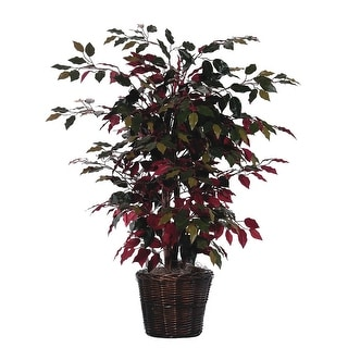 4' Capensia Bush - green, red