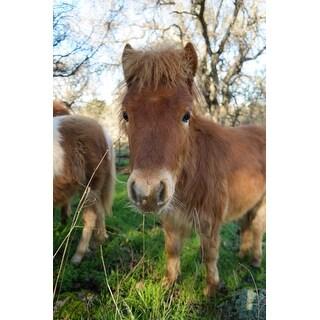 Baby Pony Photograph Art Print