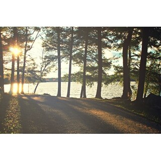 Forest And Lake Photograph Art Print