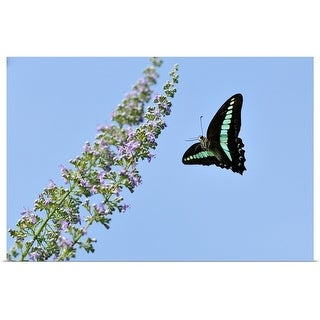 """""""Butterfly flying toward flowers."""" Poster Print"""