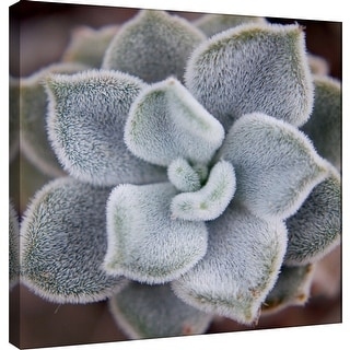 "PTM Images 9-101231  PTM Canvas Collection 12"" x 12"" - ""Fuzzy Succulent"" Giclee Succulents Art Print on Canvas"