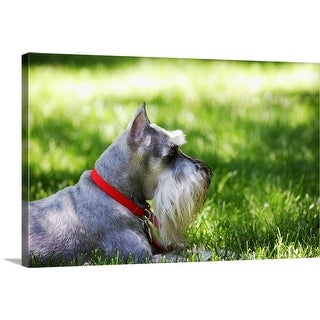 """""""A Schnauzer laying in the grass on a sunny day"""" Canvas Wall Art"""