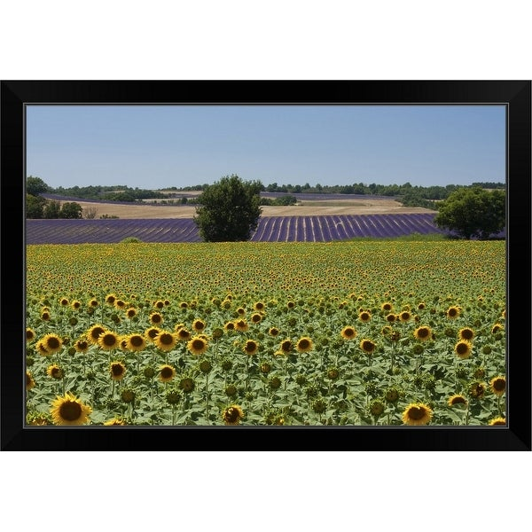 """""""Field of sunflowers in Valensol."""" Black Framed Print"""
