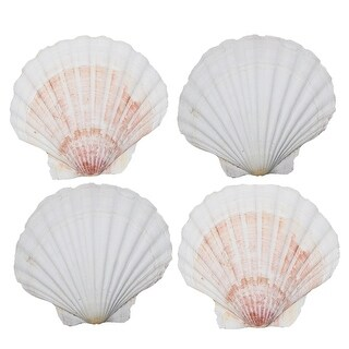 HIC Harold Import Scallop Baking Shells - Large Natural Sea Shells for Cooking, Grilling and Serving Food - Set of 4