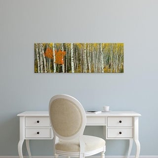 Easy Art Prints Panoramic Image 'Aspen trees in a forest, Valley Trail, Grand Teton National Park, Wyoming' Canvas Art