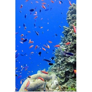 """""""Agincourt Reef, Great Barrier Reef."""" Poster Print"""