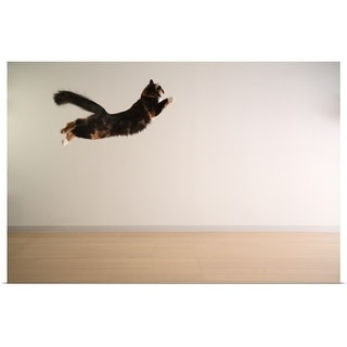 """Cat in mid air"" Poster Print"