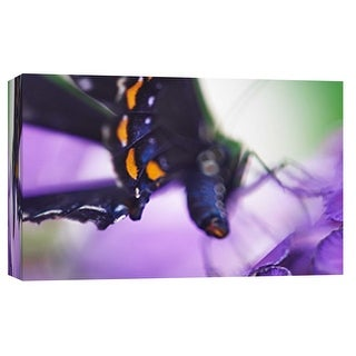 "PTM Images 9-101883  PTM Canvas Collection 8"" x 10"" - ""Butterfly Az 9"" Giclee Butterflies Art Print on Canvas"