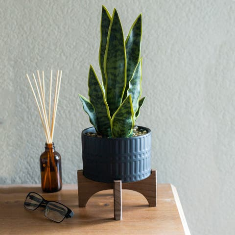 "15.5""H Artificial Snake plant in 5"" Romam Ceramic Planter on Stand - ONE-SIZE"