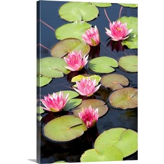 """Lotus flowers in pond"" Canvas Wall Art"