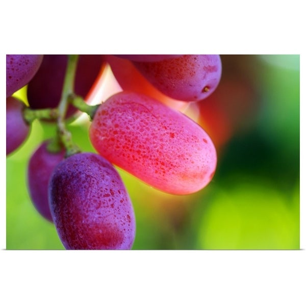 """""""Red table grapes"""" Poster Print"""