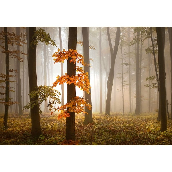 """Brewster WG5153-4P-1 Foggy Autumn Forest 100"""" x 144-3/4"""" Landscape Non-Pasted Repositionable Vinyl Coated Paper Mural - 4"""