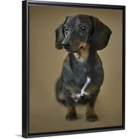 8d59ada1fc8d2 Floating Frame Premium Canvas with Black Frame entitled A young Dachshund -  Multi-color