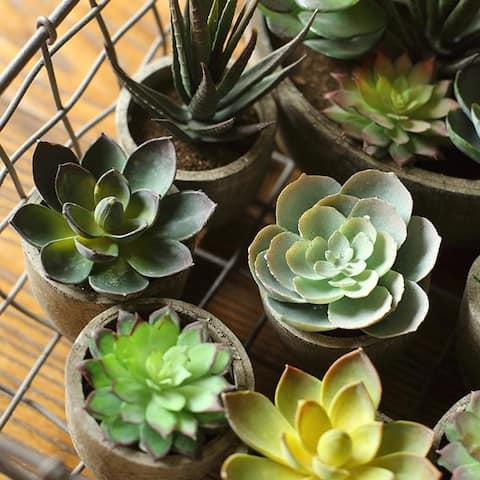 Rusticreach Artificial Small Succulent Planter Randomly Picked Set Of 5 Green