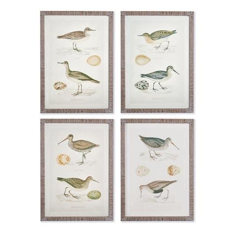 Coastal Birds Study, Set Of 4
