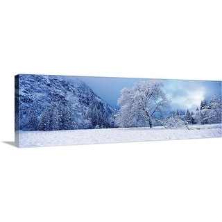 """Snow covered oak tree in a valley, Yosemite National Park, California,"" Canvas Wall Art"