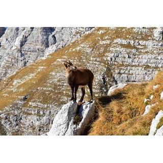 Mountain Goat Photograph Art Print