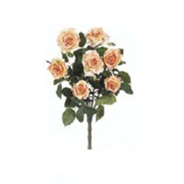 FBR054-AP 21.5 in. Apricot Confetti Rose Bush X7 -Case of 12- Pack of 6