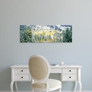 Easy Art Prints Panoramic Images's 'Aspen trees, Teewinot Mountain, Grand Teton National Park, Wyoming' Canvas Art