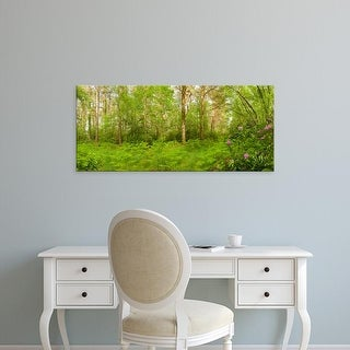 Easy Art Prints Panoramic Images's 'Trees with plants in forest, Nomansland, New Forest, Hampshire, England' Canvas Art