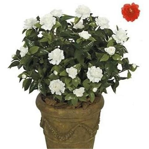 Autograph Foliages A-073R - 28 Inch Large Gardenia Bush - Red