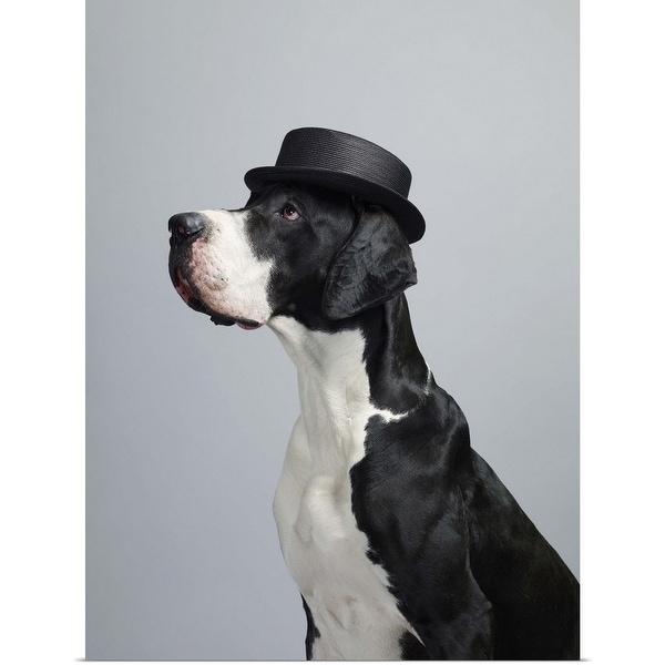"""Great Dane wearing a hat"" Poster Print"