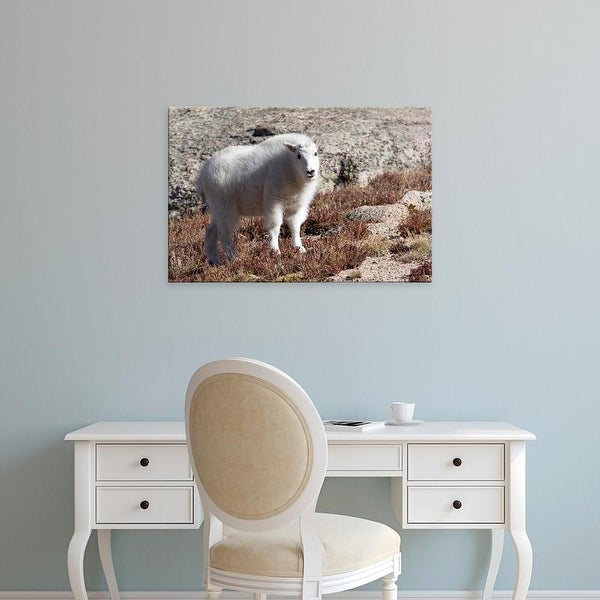 Easy Art Prints Diane Johnson's 'Mount Evans Mountain Goat' Premium Canvas Art
