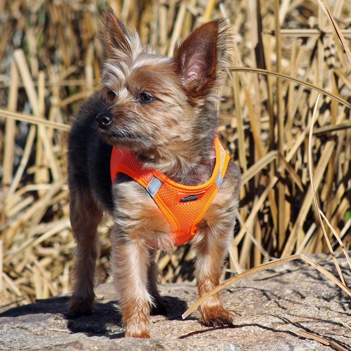 American River Ultra Choke-Free Mesh Dog Harness by Doggie Design (Fossil Brown - 3X-Large)