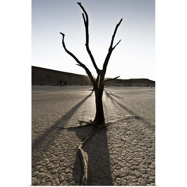 """Tree growing in desert landscape"" Poster Print"