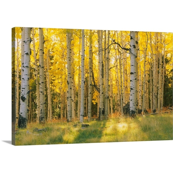 """""""Aspen trees in a forest, Coconino National Forest, Arizona"""" Canvas Wall Art"""