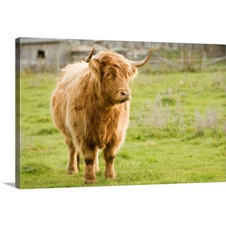 """""""Highland Cattle in Pasture, Burnt River, Ontario, Canada"""" Canvas Wall Art"""