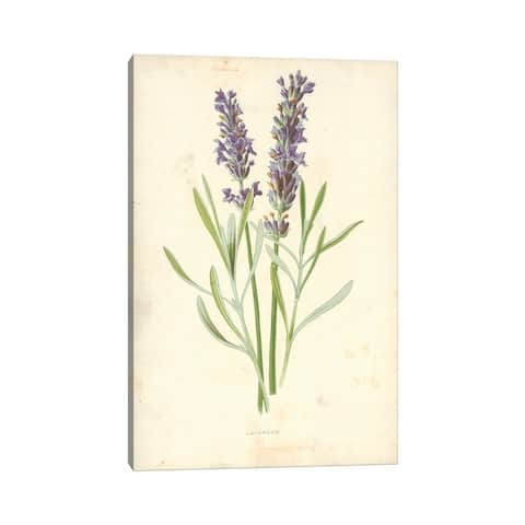 """iCanvas """"Lavender (Illustration From Familiar Garden Flowers, 1st Series)"""" by Frederick Edward Hulme Canvas Print"""