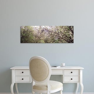 Easy Art Prints Panoramic Image 'Dogwood trees blooming in a forest, Yosemite National Park, California' Canvas Art
