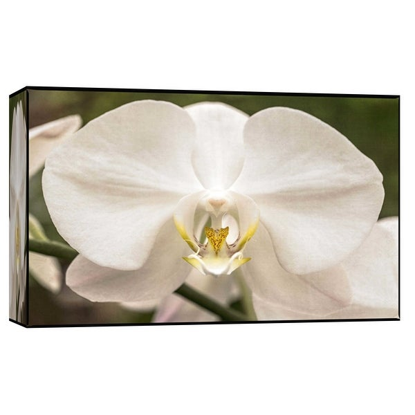 "PTM Images 9-102263 PTM Canvas Collection 8"" x 10"" - ""White Orchid"" Giclee Orchids Art Print on Canvas"