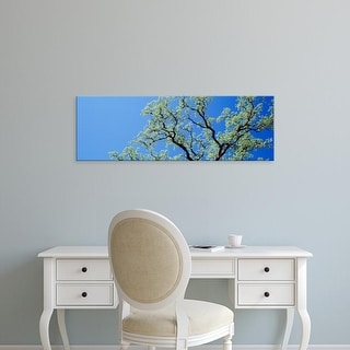Easy Art Prints Panoramic Images's 'Oak Tree, California, USA' Premium Canvas Art