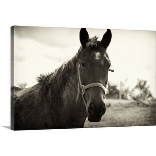"""Close up of a horse"" Canvas Wall Art"