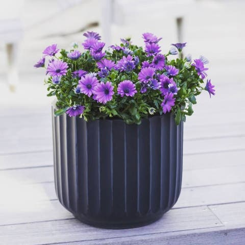 DreamPatio Garland Fiberstone Planter (Saucer sold separately)